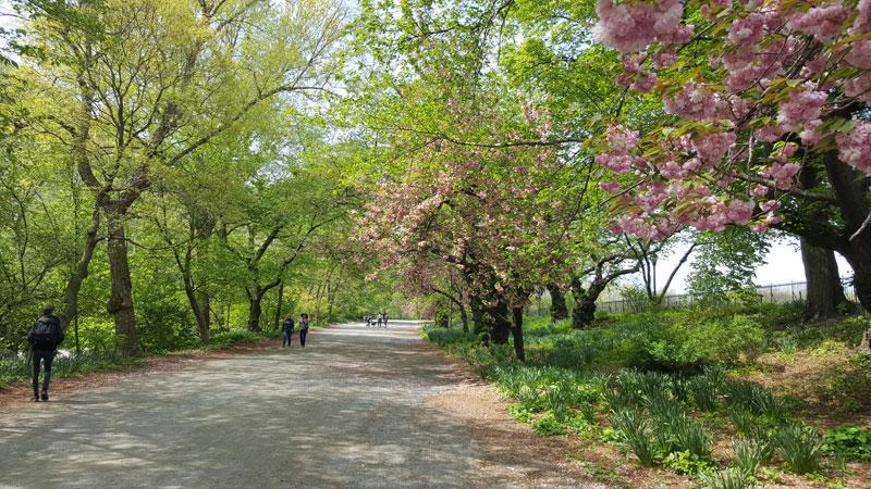 New York en famille Central Park
