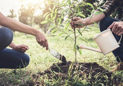 Cadeaux originaux à offrir à un mariage - arbre planter